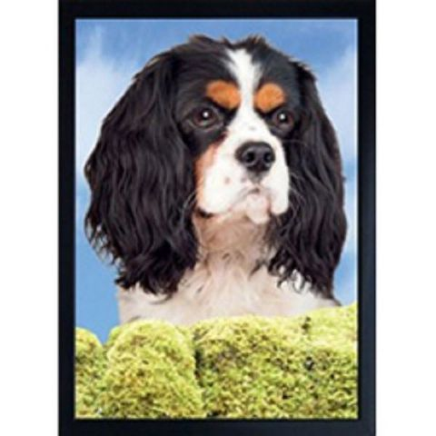 KING CHARLES CAVALIER  TRI-COLOUR 3D FRIDGE MAGNET